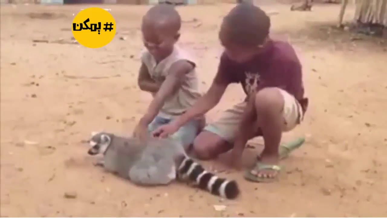حيوانات تطلب المساعدة من البشر   !!
