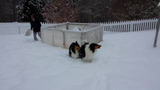 Collies snow day