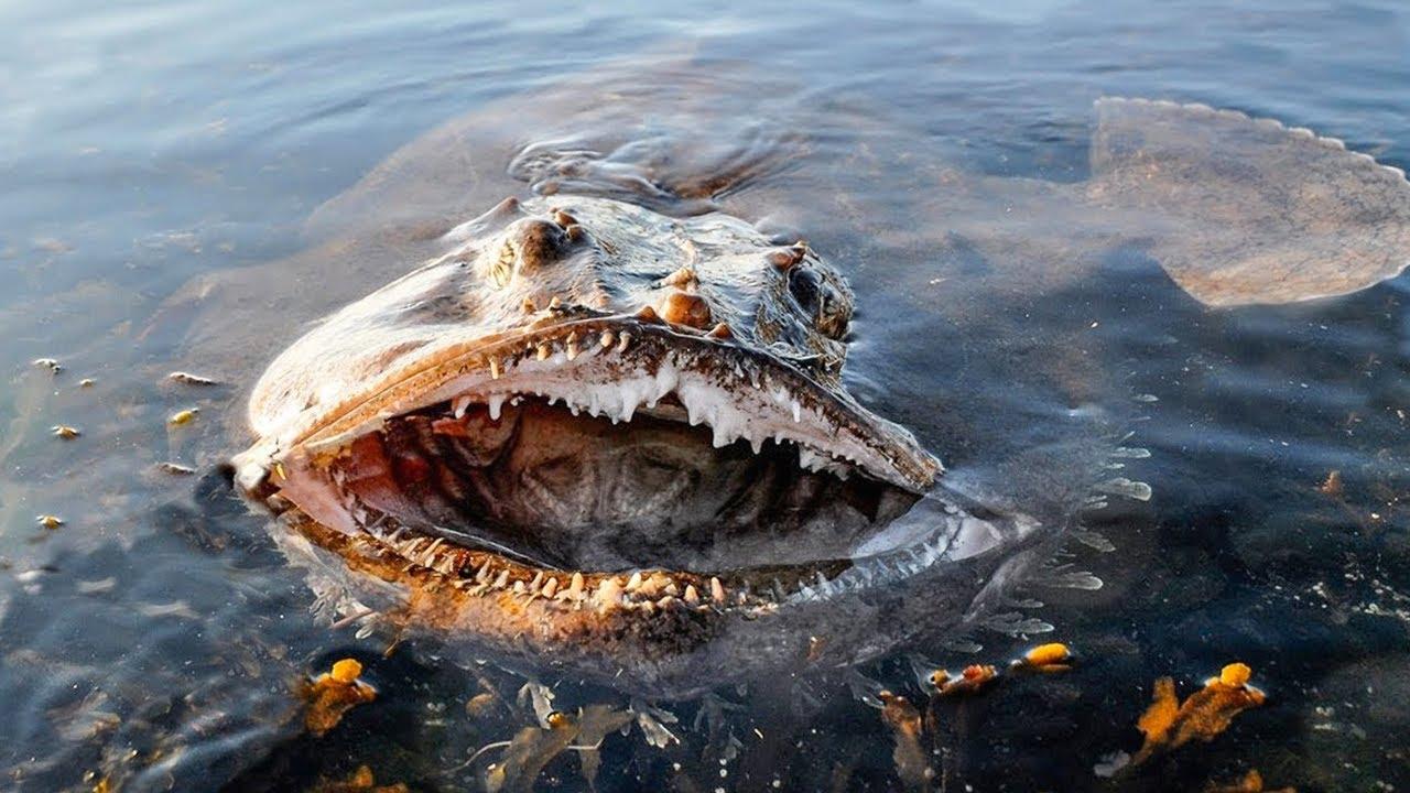 Download 15 Dangerous Ocean Creatures You Should Never Touch