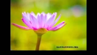 alliyambal poove YESHUDAS kannanneelima    sameer- YouTube.flv