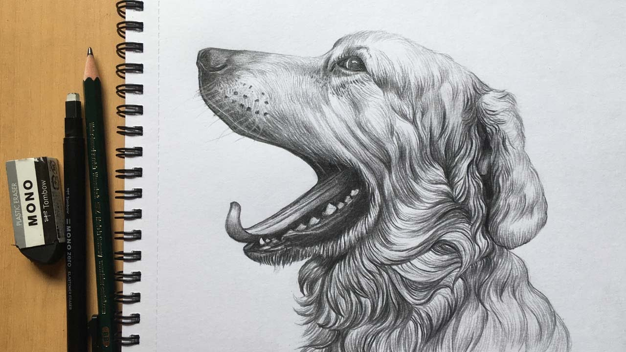 Dog Face Drawing in Pencil   Pencil Sketch   Animal Drawing