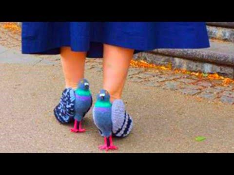 видео: Туфли в виде голубей шокировали людей