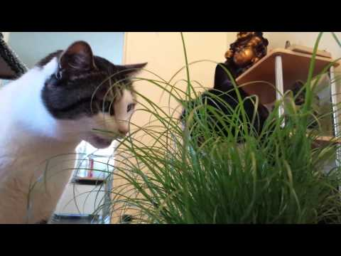 Bib marl e herbe chat youtube - Herbe a chat ...