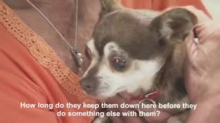 Red Star™ Rescue In Oklahoma Documentary