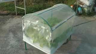 Simple Home Hydroponics Kit for Beginners -- Kids Under 10(The advantages of hydroponics systems are cheap, healthy, delicious, clean, pesticide-free vegetables and fruits. Kids under 10 can easily do it easily DIY., 2015-05-18T04:24:44.000Z)