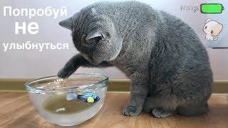 Британский кот ЛОВИТ РЫБУ и не БОИТСЯ воды / British cat Harry