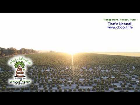 That's Natural CBD Oil - Whole Hemp Fields in Colorado