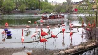 Московский зоопарк. Розовый фламинго