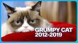 Grumpy Cat Dead at 7: Look Back at Her Greatest Accomplishments