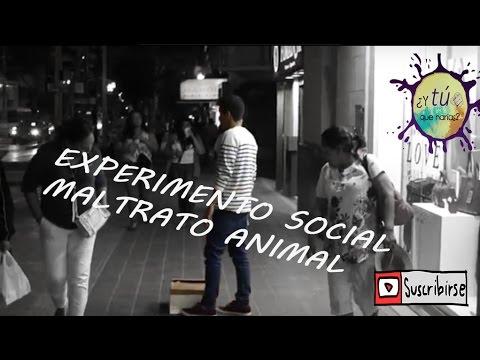 Experimento social - Maltrato animal ¿y tú qué harías?