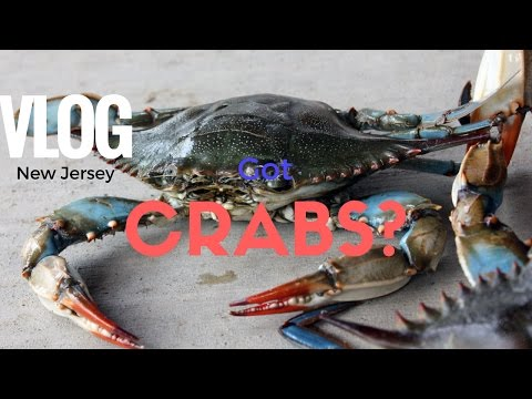 How To Crab In Stone Harbor & Avalon New Jersey