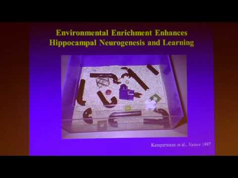 P-SPAN #305: Berkeley City College:  Science Lecture with David Schaffer, Ph.D.