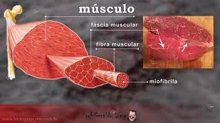 Tecido Muscular 2