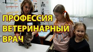 Профессия ветеринарный врач, описание работы ветеринара. Ветеринарная клиника доктора Чигаевой Пермь