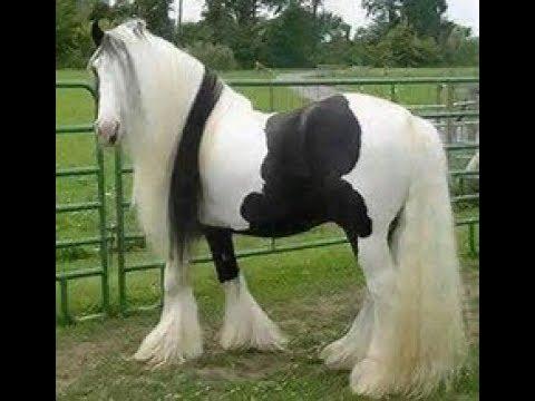 Top 15 les plus beaux chevaux du monde youtube - Les plus beaux plafonds du monde ...