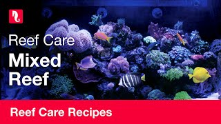 Mixed Reef | Reef care recipe