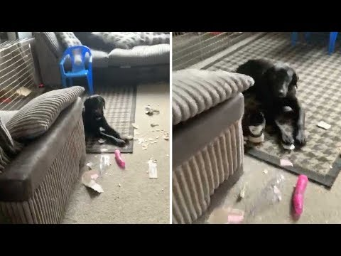 Otis - Dog Rips Open Neighbors Adult Toy Package, Things Get Awkward