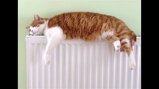 Как сделать экономное и качественное отопление и теплый пол