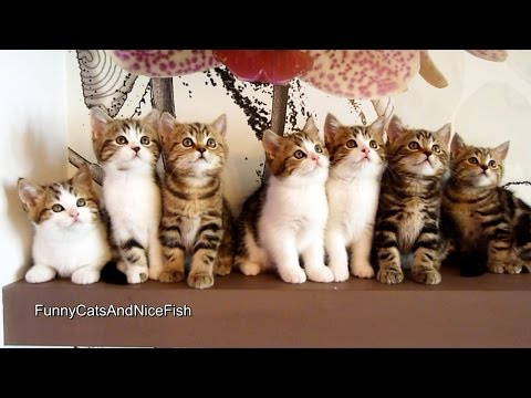 Epic Dance Battle of Cute Kittens | Funny Cats Compilation