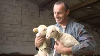 Histoire Métiers - Lionel, éleveur d'ovins