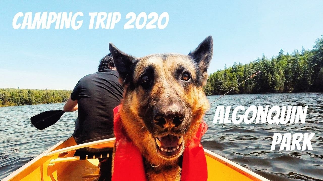 Algonquin Park Camping Trip 2020 - YouTube