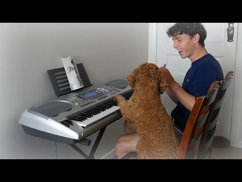 I taught my dog to play the piano