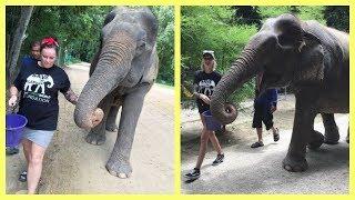 Man ska aldrig rida på elefanter - Viafree avsnitt 3