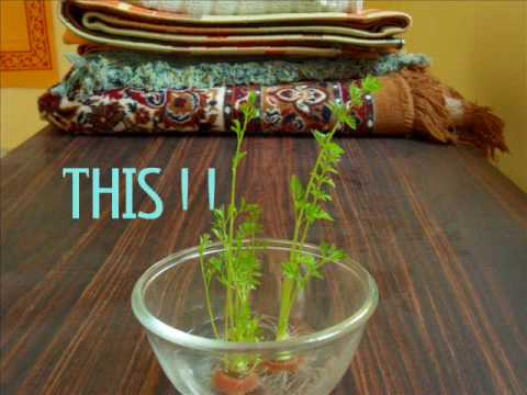 Carrot plant growing         (TIME LAPSE)