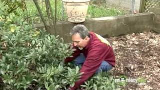 April Gardening Tips - Trees and Shrubs