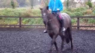 me riding freckles at hill farm riding centre