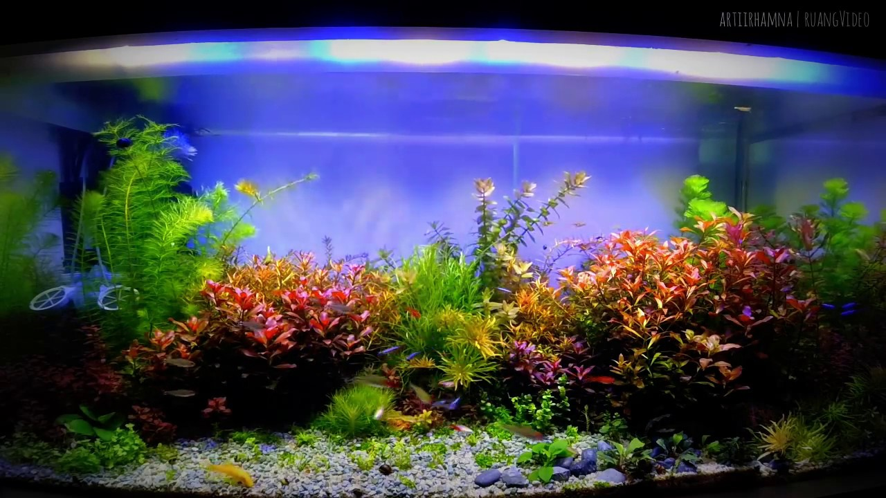 Nice Lighting Dutch Style Aquascape