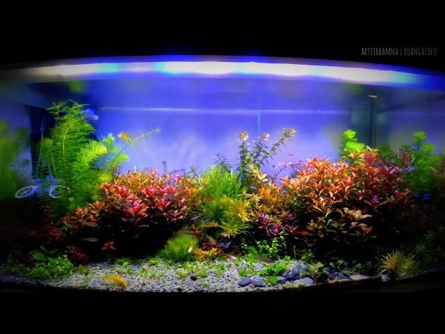 Unduh 66 Background Hitam Aquascape HD Terbaik - Pusat ...