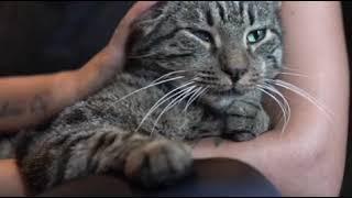 それでも誰かを愛したい。飼い主亡き後捨てられた猫、持ち前の人懐っこさで新たなる飼い主が見つかる(アメリカ)