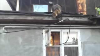 Хитрый кот ловко залезает в окно! Smart cat gets home