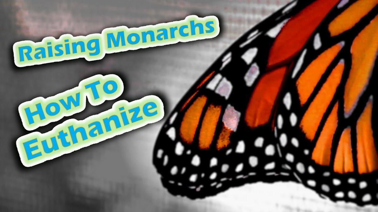 Her work helping save monarch butterflies