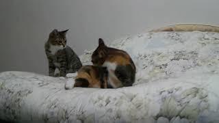 かまって欲しくて子猫が母猫にちょっかい出してたら…