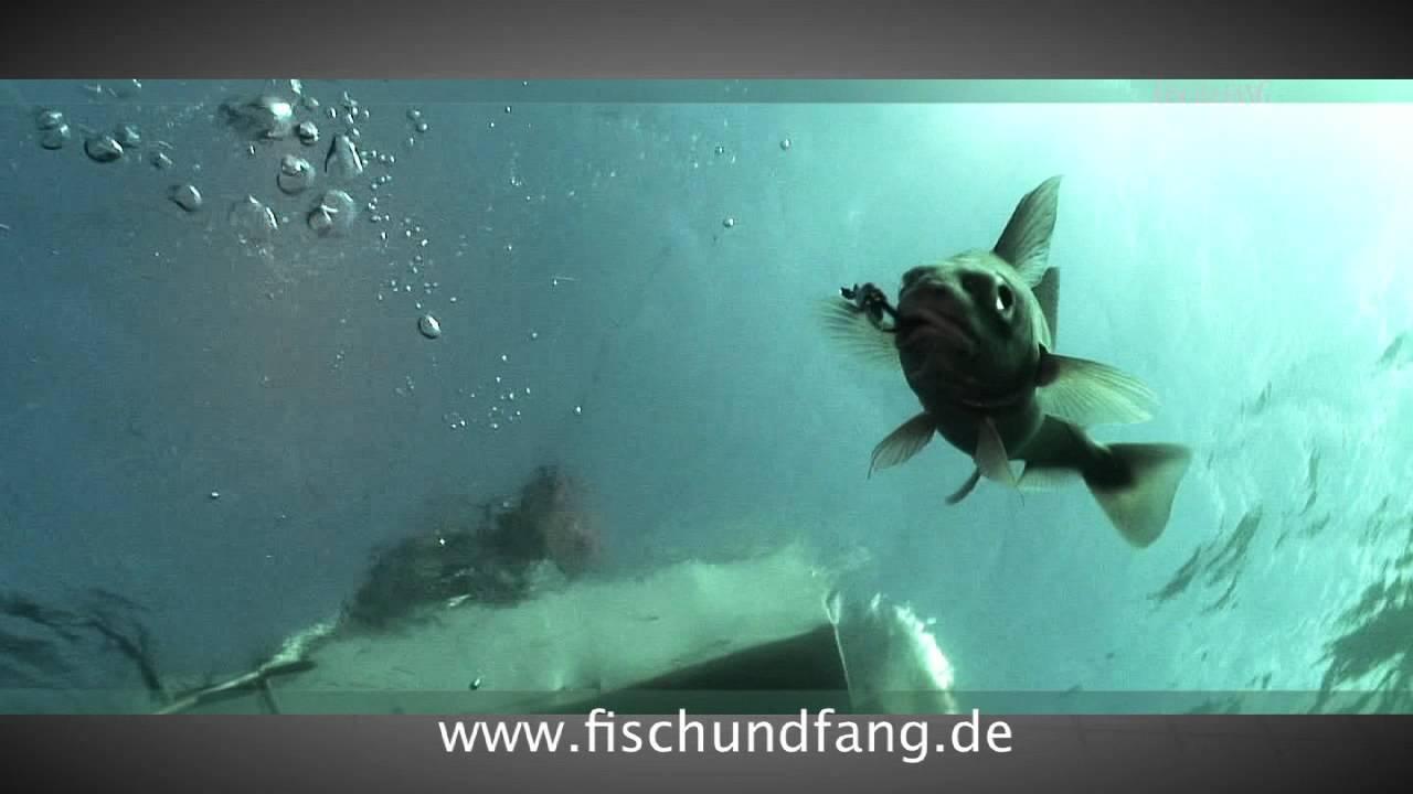 fisch und fang youtube