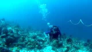 maldives sample Thumbnail