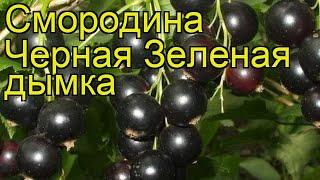 Смородина черная Зеленая дымка. Краткий обзор, описание характеристик Zelenaia dymka