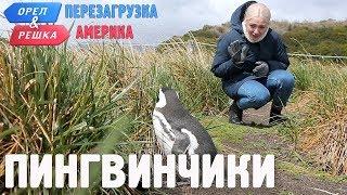 Пингвины Ушуайи! Орёл и Решка. Перезагрузка. АМЕРИКА