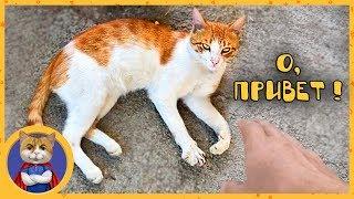 История кота, которому мы искали хозяев