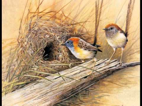 PINTURAS DE PAJAROS - YouTube
