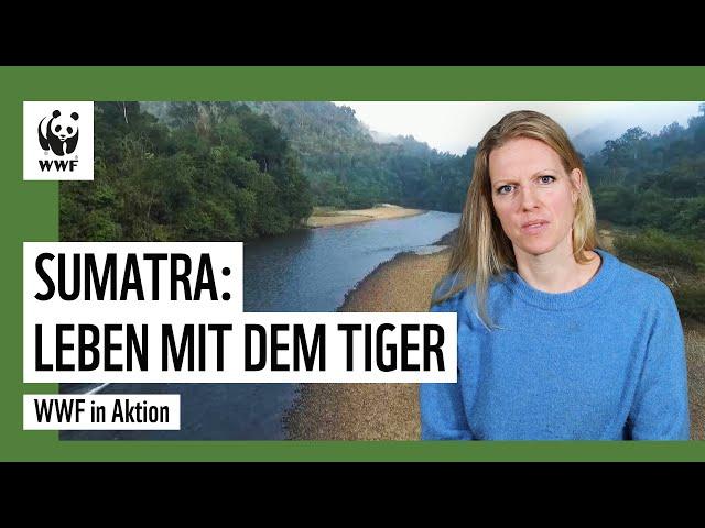 Sumatra: Wenn Mensch und Tiger zusammenleben