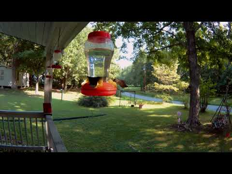 VICTURE AC 8OO ACTION CAM 2K TEST - HUMMING BIRDS
