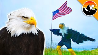 Would you VOTE for the Eagle?