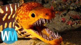 Top 10 des créatures marines les plus dangereuses !