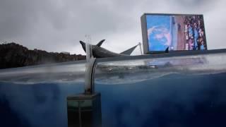 【名古屋港水族館】イルカショーの最前列で水を被ってきた 【注目は3分半過ぎ】 thumbnail