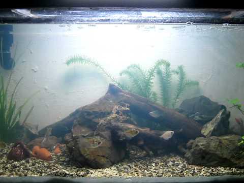 DIY aquarium ALMOST ZERO COST MADE FROM MARINE WOOD upgrade