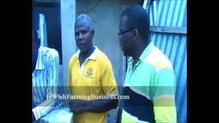 fish farming in nigeria - starting up