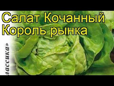Салат кочанный Король рынка. Краткий обзор, описание характеристик, где купить семена Lactuca Sativa